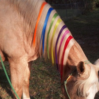 Colorful Equine Mane Color Stripes -- Mane Extensions for Horse