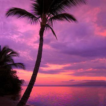 Palm Tree Sunset II Printed Photo Backdrop / 388