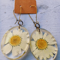 Preserved Daisy Earrings