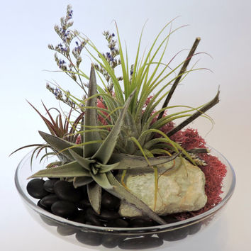 Air Plant Cloche Terrarium