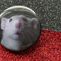 Rat Button Patch Sweet Faced Masked White Dumbo Rat - Pinback Button -Original Photo