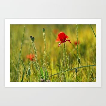 Poppy Art Print by Guido Montañés