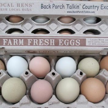 Organic Farm Fresh Cage Free Eggs | Laconia, Indiana Local Pick-up