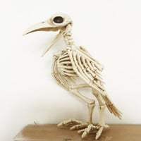 Skeleton Raven Plastic Animal Halloween Decoration