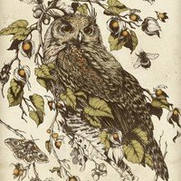 """""""Great Horned Owl"""" - Art Print by Teagan White"""
