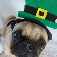 St PATRICKS DAY LEPRECHAUN HAT for all size pets by ilickyou