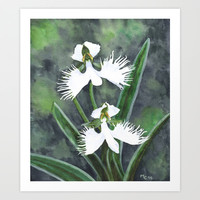 Habenaria radiata - Orchidées colombes Art Print by Savousepate