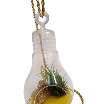 Yellow Airplant Terrarium with Stand