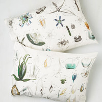 Rustic Bedtime Botany Pillowcase Set by ModCloth