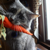 Catnip CaRRots - Cat Toy - Pet Toy - Proceeds go to Shelter Animals -  Catnip Toy - Cat Toy - Cats - Animal Rescue