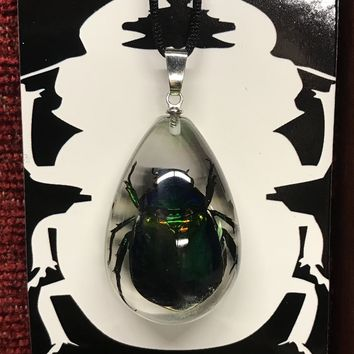 Medium Chafer Beetle Tear Drop Necklace