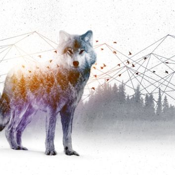 A Wilderness Within / Wolf Art Print by Soaring Anchor Designs | Society6