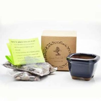Japanese Cherry Blossom Flowering Bonsai Seed Kit- Gift - Complete Kit to Grow