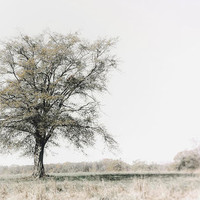 Lonely Tree #minimalism by Andrea Anderegg Photography