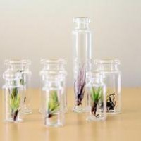 Air Plant Terrariums RESERVED for by TortoiseLovesDonkey on Etsy