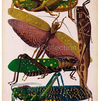 Insects, Plate 7 by E.A. Seguy