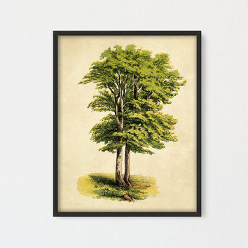 Beech Tree Printable, Tree Poster, Encyclopedia Book Plate, Farmhouse Decor, Cottage Wall Art, Nursery Decor, Vintage Tree Print Green Decor