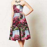 Alpenrose Dress