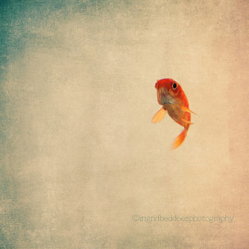 Fish photograph, goldfish fine art print, animal art, whimsical, nature photography, surreal, orange, gold, home decor, nursery, wall decor