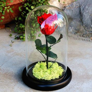 Disney Decoration Birthday Gifts Beauty and The Beast The Little Prince Glass Cover Fresh Preserved Flowers Rose Children Toys