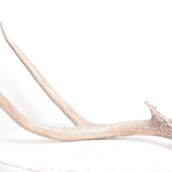 Resin Faux Taxidermy Antler Piece Perfect for a Vegan Country Cabin or Winter Tablescape