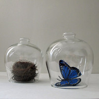 Pair of Vintage Glass Cloches, Natural History Decor