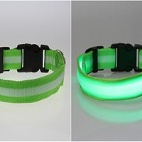 Pet Glow LED Collar