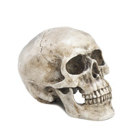 Skull Decorative Accent