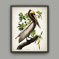 Vintage American Bird Print Set Of 6 - Flamingo - Brown Pelican - Widgeon - Blue Heron - Blue Crane - Scarlet Ibis - John Audubon AB535