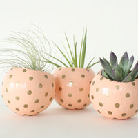 Peach & Gold Air Plant Planter Pod. Hand painted Air Plant Terrarium. Apricot Metallic Gold Dots Spots. Modern Planter for Valentine's Gift