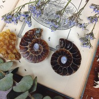 moonstone adorned ammonite pair from The Opaque