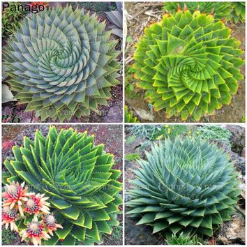100pcs Rare cactus bonsai succulent Plants bonsai pot flower plants, perennial indoor plant for home garden novel plants