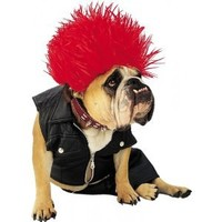Paper Magic Group Zelda Punk Dog Pet Costume,Small
