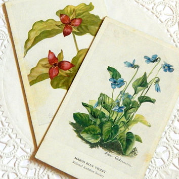 Vintage Audubon Flower Cards. Wildflowers. Flower Postcards. Botanical Print. Flower Illustration. Scrapbook Ephemera. Journal Supply.