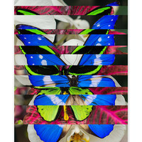 Butterfly Photo Collage Matte