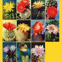 Cacti (Photo by V. Tikhomirov) - Set of 15 Vintage Photo Postcards - Printed in the USSR, «Planet», Moscow, 1972