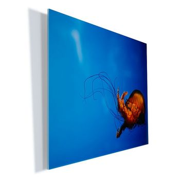 ''Single Jellyfish'' Wall Art