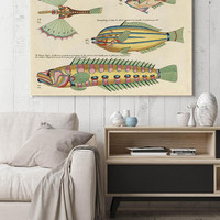 Fish Poster| Sea Life Art| Taxonomy Wall Art| Fishes Wall Art| Fishes Print| Animal Poster| Natural History| Vintage Zoology| HAP014