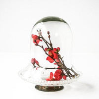 Glass Cloche / Dome / Bell Jar with Crystal and SIlver Base