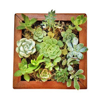 Handmade Vertical Garden DIY Kit
