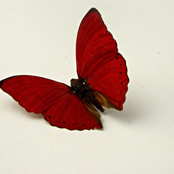Butterfly Specimen, Red Butterfly,  Décor, Terrarium Accent, Wedding Decor, Photography Prop, DIY, Craft Supply, Creative, Nature
