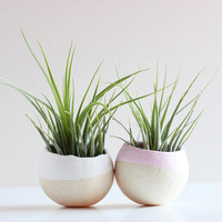 Valentine's Day Mini Air Plant Pod Set of 2 - White and Pale Pink