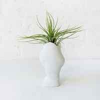 Tushiez Air Plant Holder - Cute Little Planter - Fun Display Items - Indoor Outdoor Decoration - Mini Flower Vase - Matte Finish