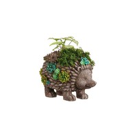 New Creative Succulent Garden Hedgehog Planter