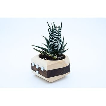 Magnet Wooden Planter -- -- Refrigerator Succulent Cactus Magnetic Wood Pot -- Modern Minimalism Kitchen Home Decor Gift