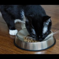 Cat Food Bowls by Dr. Catsby