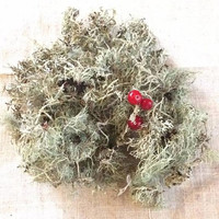 100g / 3.5oz Dried Lichen, Grey Lichen, Natural Supplies, Terrarium Supplies, Rustic Supplies, Dried Moss, Grey Moss
