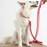 Fire Hose Red Dog Collar