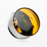 A Pair of Jurassic Amber Resin Beetle Inlay Ear Gauge Plug