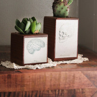 Brain & Skull Decorative Wood Planters